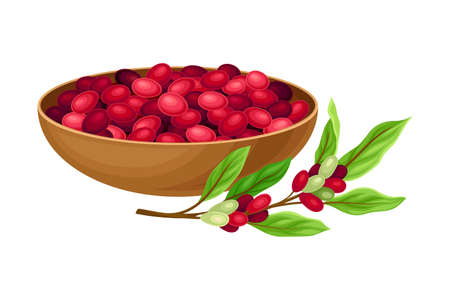 Coffea Plant Branch with Ripe Edible Fruits in Bowl  Illustration.