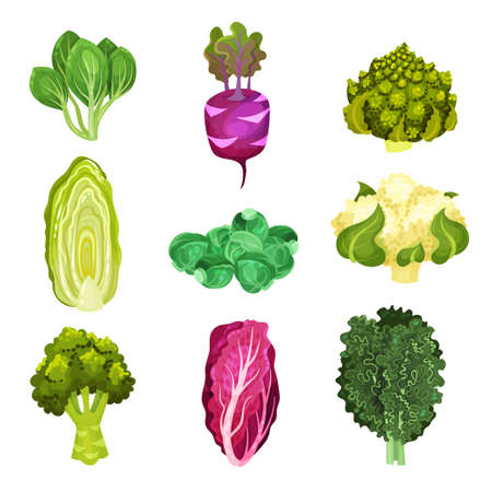 Different Cabbage with Broccoli and Pak Choi Set