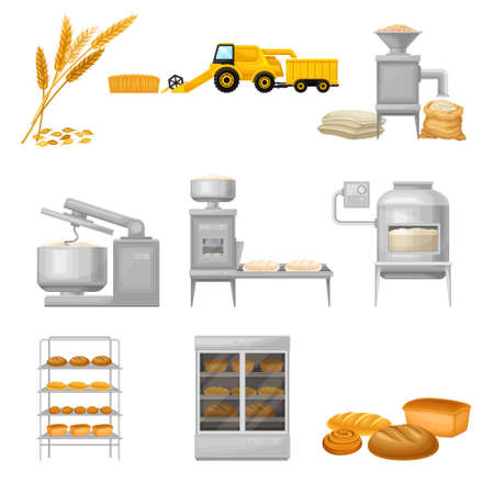 Bread Production from Grain Crop Harvesting to Grinding and Baking Vector Illustration Set