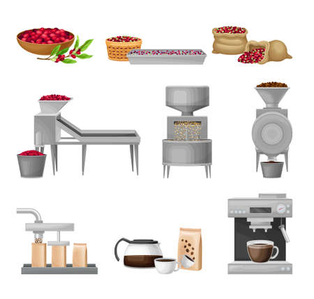 Coffee Production Equipment and Coffea Plant Branch and Fruit Harvesting Vector Set