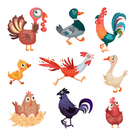Feathered Farm Birds with Hen and Duck Vector Set Illustration