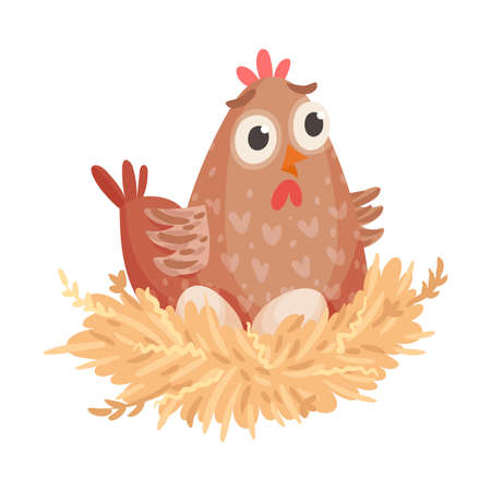 Hen Sitting on Eggs Isolated on White Background Vector Illustration