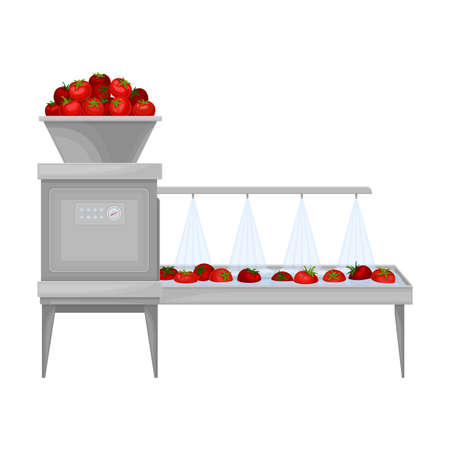 Ketchup Manufacturing with Tomato on Conveyor Belt Washing Process Vector Illustration Ilustração