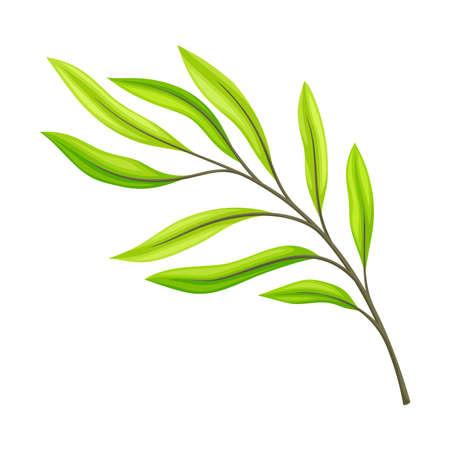 Green Leaf and Foliage with Stem and Veins or Fibers Vector Illustration Ilustração