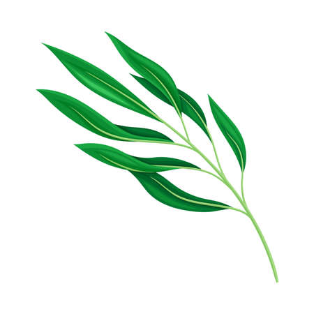 Bright Fibrous Leaf with Stem and Veins Vector Illustration