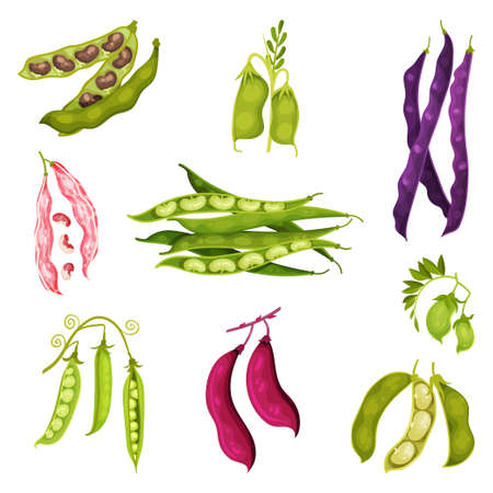 Grain Legumes or Pulse Crop with Pods and Beans Vector Set