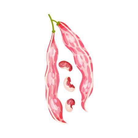 Grain Legume or Pulse Crop with Pod and Beans Vector Illustration Ilustração
