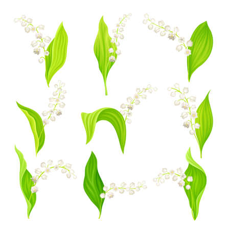 Lily of the Valley with Pendent Bell-shaped White Flowers Vector Set