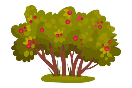 Bush with Berries and Lush Foliage as Forest Element Vector Illustration Illusztráció