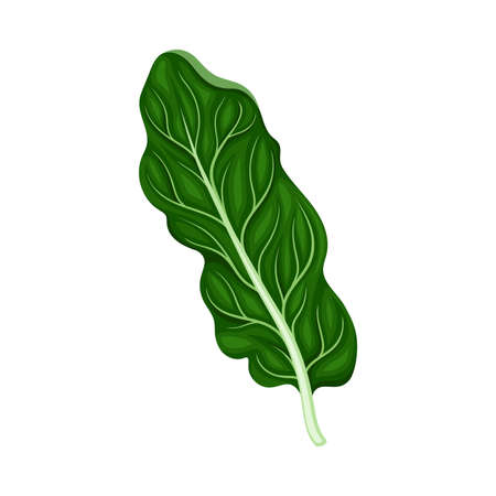 Leaf Vegetable or Salad Greens as Plant with Edible Leaves Vector Illustration Vetores