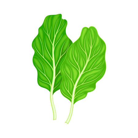 Leaf Vegetable or Salad Greens as Plant with Edible Leaves Vector Illustration
