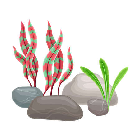 Smooth Pebble or Sea Stones with Seaweeds and Algae Vector Illustration