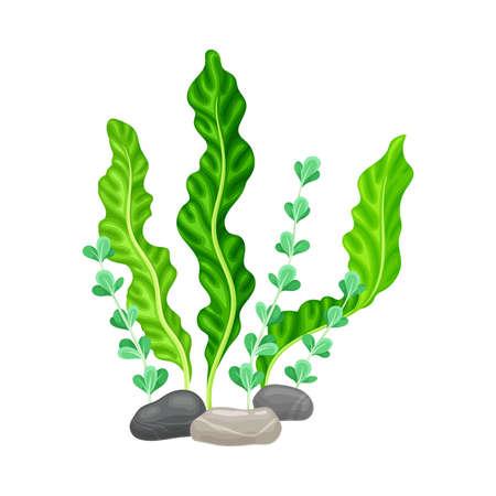 Smooth Pebble or Sea Stones with Seaweeds and Algae Vector Illustration Ilustración de vector