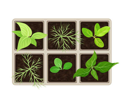 Seedling or Young Plants Growing in Plastic Pot or Box Above View Vector Illustration