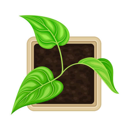Seedling or Young Plant Growing in Plastic Pot or Box Above View Vector Illustration Illustration