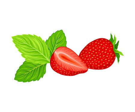 Mature Red Strawberry Whole and Half with Leaves Vector Illustration