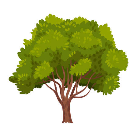 Green Tree as Perennial Plant with Trunk, Branches and Leaves Vector Illustration