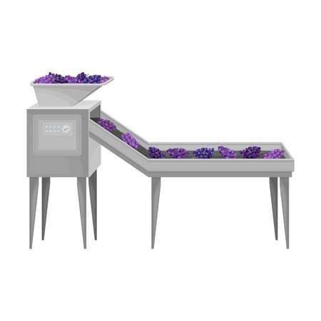 Destemmed Grapes Rested on Conveyor Belt as Sorting Process Vector Illustration 矢量图片