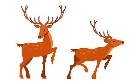 Brown Deer with Antlers and Slender Legs in Standing Pose Vector Set
