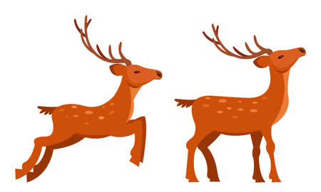 Brown Deer with Antlers and Slender Legs in Standing and Jumping Pose Vector Set