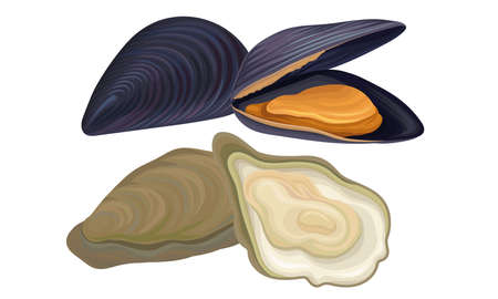 Oyster as Seafood and Marine Delicacy Vector Set