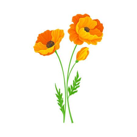 Golden Poppy or California Poppy Flower as Flowering Plant Vector Illustration