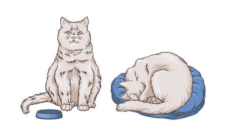 Cat Curling Up and Sitting Near Feeding Bowl Vector Set 矢量图像