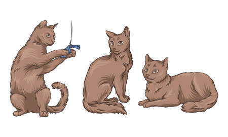 Cat Playing with Cord and Sitting Vector Set 矢量图像