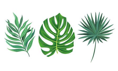 Green Tropical Leaves as Exotic Flora Vector Set Ilustración de vector