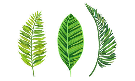 Green Tropical Leaves as Exotic Flora Vector Set