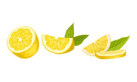 Halved Lemon Citrus Fruit with Green Leaf Vector Set