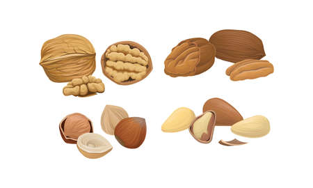 Nuts as Dry Edible Seeds with High Fat Content Vector Set