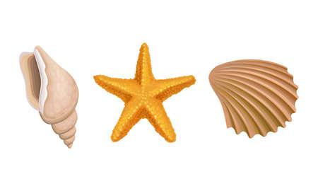 Sea Habitants with Barnacle and Starfish Vector Set
