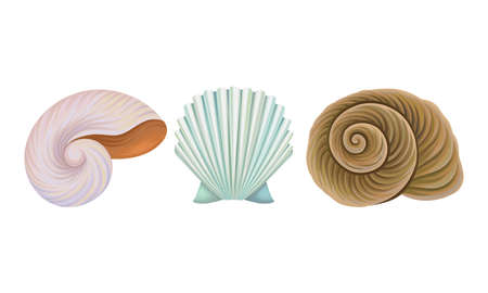 Sea Habitants with Barnacle and Spiral Conch Vector Set  イラスト・ベクター素材