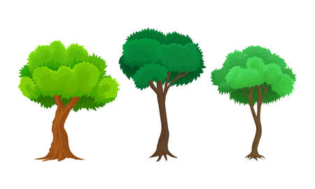 Green Tree as Perennial Plant with Trunk, Branches and Leaves Vector Illustration Set