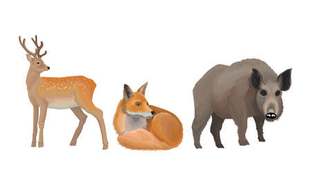 Wild Mammals Like Deer and Fox as Forest Habitant Vector Set Vettoriali