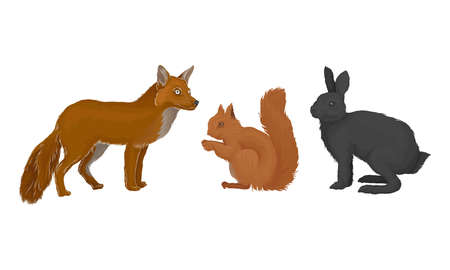 Wild Mammals Like Fox and Squirrel as Forest Habitant Vector Set