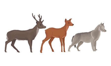 Wild Mammals Like Deer with Antlers and Wolf as Forest Habitant Vector Set Vecteurs