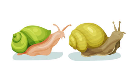 Crawling Snails as Shelled Gastropod with Coiled Shell Vector Set Çizim
