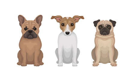 Purebred Dogs Sitting on Hind Legs Vector Set