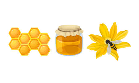Honeyсomb with Hexagonal Wax Cells and Flower with Honeybee Vector Set
