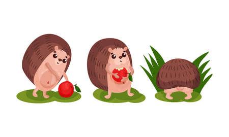 Cute Hedgehog with Prickles Eating Apple Vector Set 矢量图像