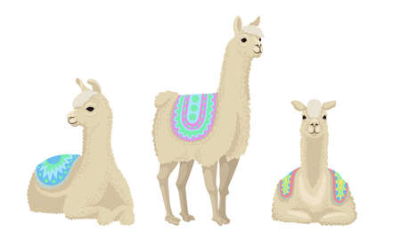 White Wooly Llama or Alpaca as Domesticated South American Camelid Vector Set 矢量图像