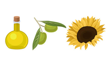Olive and Sunflower Organic Vegetable Oil in Glass Jars Vector Set