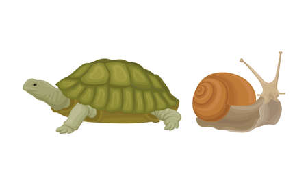 Huge Turtle and Snail as Reptile Vector Set