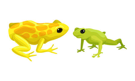 Frog as Short-bodied and Tailless Amphibians Vector Set  イラスト・ベクター素材