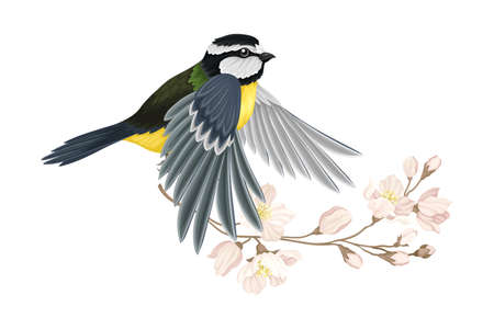 Great Tit with Black Head and Yellow Body Flying Towards Apple Blossom Branch Vector Illustration