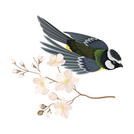 Great Tit with Black Head and Yellow Body Flying Towards Apple Blossom Branch Vector Illustration Ilustración de vector