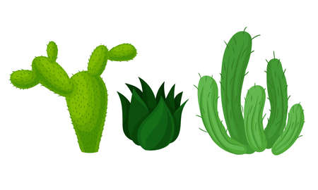 Cactus as Spiny Plant Living in Dry Environments Vector Set