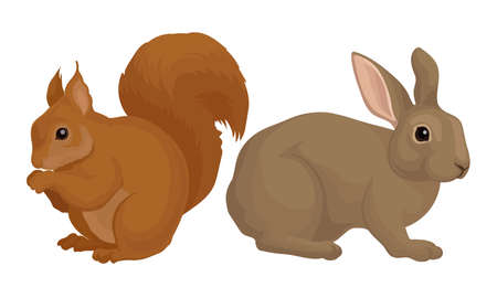 Rodents with Robust Bodies and Short Limbs Vector Set
